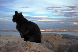 Black-cat-clifftop
