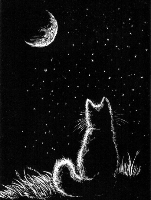 Cat-and-the-moon