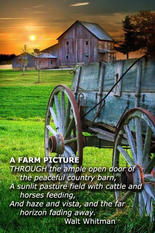 A-Farm-Picture