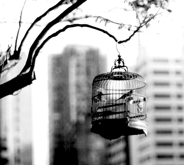 Caged_birds
