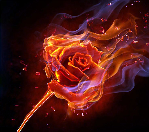 Fire-rose-synthesis-image